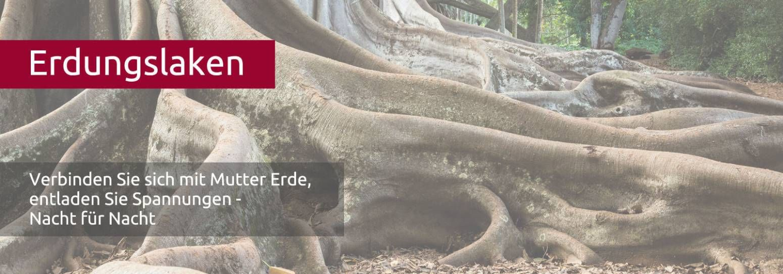 Erdungslaken -  verbinden sie sich mit der Erde -Wurzeln eines tropischen Baums