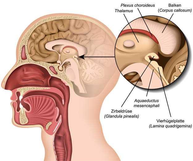 Schematische Darstellung des Gehirns mit der Zirbeldrüse als Zentrum