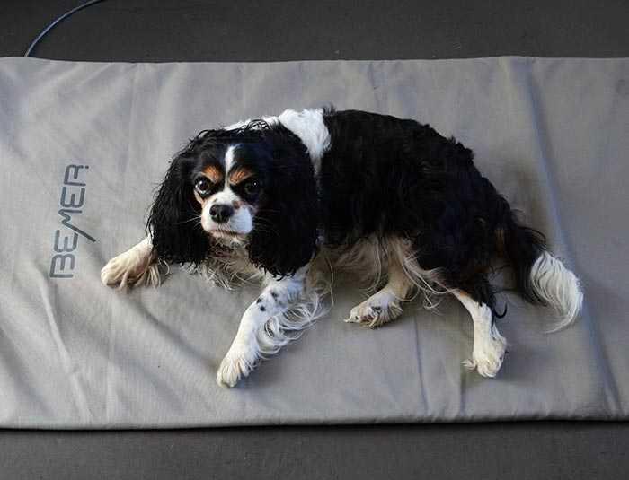 Ein Hund liegt auf der BEMER-Matte