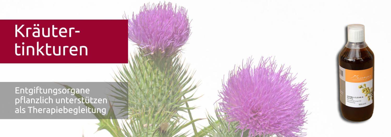 Entgiften mit Kräutertinkturen - DermaClean L Extra- Artischocke mit lila Blüte