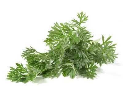 Vorschau: Echtes Wermutkraut - die Pflanze erscheint gräulich-grün