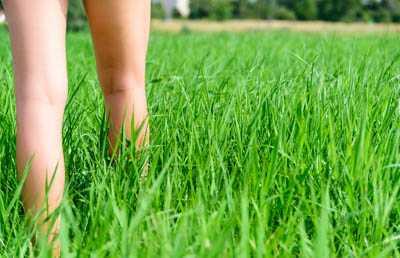 Zeckengefahr im Gras